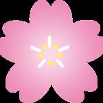 【桜峠の桜 開花しました!】